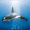 Reserva oceanica: reserva de barbara